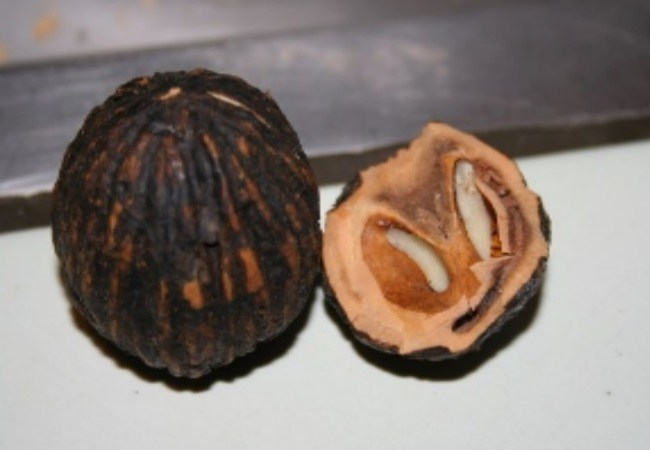 Black Walnut For Cold Sores