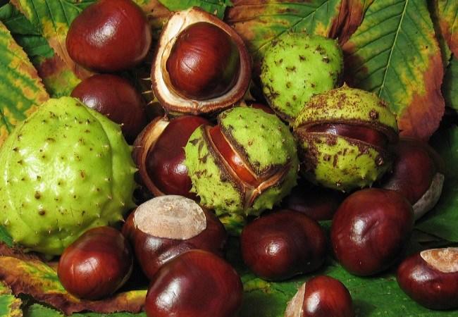 Horse Chestnut For Spider Veins