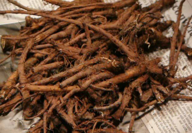 Dandelion Roots For Alcohol Cravings