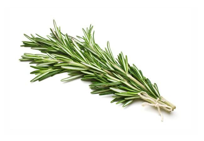 Rosemary For Fleas