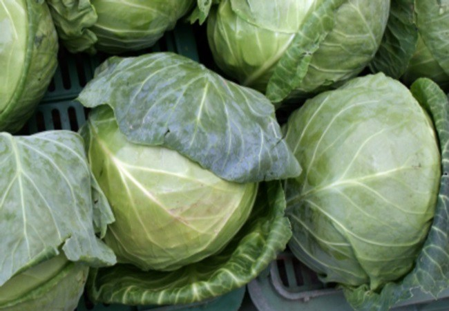 Cabbage For Peptic Ulcer